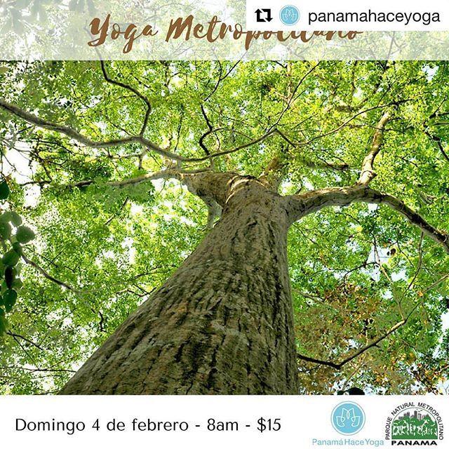 """Este domingo vuelve a la naturaleza camina y haz yoga en un mirador.  Pásate por la cuenta de @panamahaceyoga para inscribirte y ver todos los detalles.  #Repost @panamahaceyoga  Save the date! El Parque Metropolitano es conocido como El Pulmón de Panamá por eso como tradición decidimos venir a respirar y practicar yoga en este lugar. Reserva la fecha domingo 4 de febrero a las 8 de la mañana Yoga en el Mirador como parte de la jornada """"Parque Saludable Gente Sana"""". Pronto más información…"""