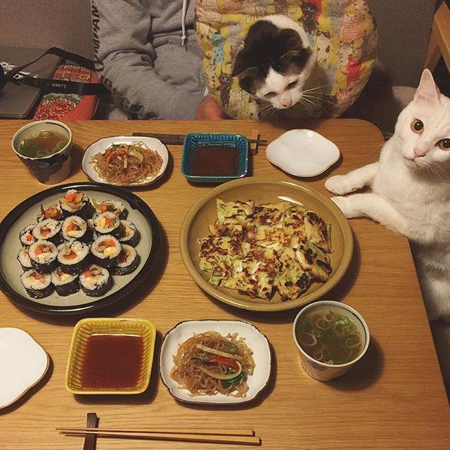 naomiuno 韓国定食。 キンパ、イカのチヂミ、チャプチェ♩ キンパは買ってきたや〜つ。 #八おこめ #ねこ部 #cat #ねこ #八おこめ食べ物 #韓国料理 #キンパ #チヂミ #チャプチェ  2017/02/17 23:31:14