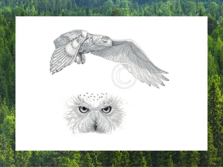 Una tarjeta de felicitación en blanco que representa a una lechuza en vuelo.  IDEAL para: Amantes de la naturaleza, amantes de la naturaleza, miembros de la sociedad de Audubon y los fanáticos de la naturaleza. Es perfecto como una tarjeta o arte de la pared de la listo-a-frame.  HISTORIA: La obra de arte se titula Silent Wings. Considera precursores de la muerte, buhos han ganado este nombre de su vida nocturna; pues se cree que sólo los que han pasado en el Reino de la espíritu de viaje…