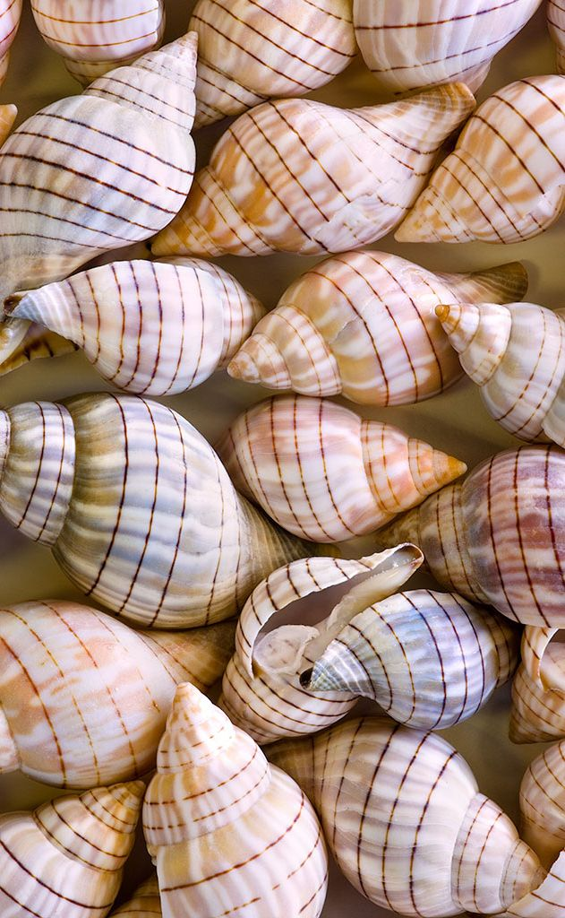 I collect shells, so I find myself incorporating them into many different rooms - bedroom, living rooms, even the kitchen.