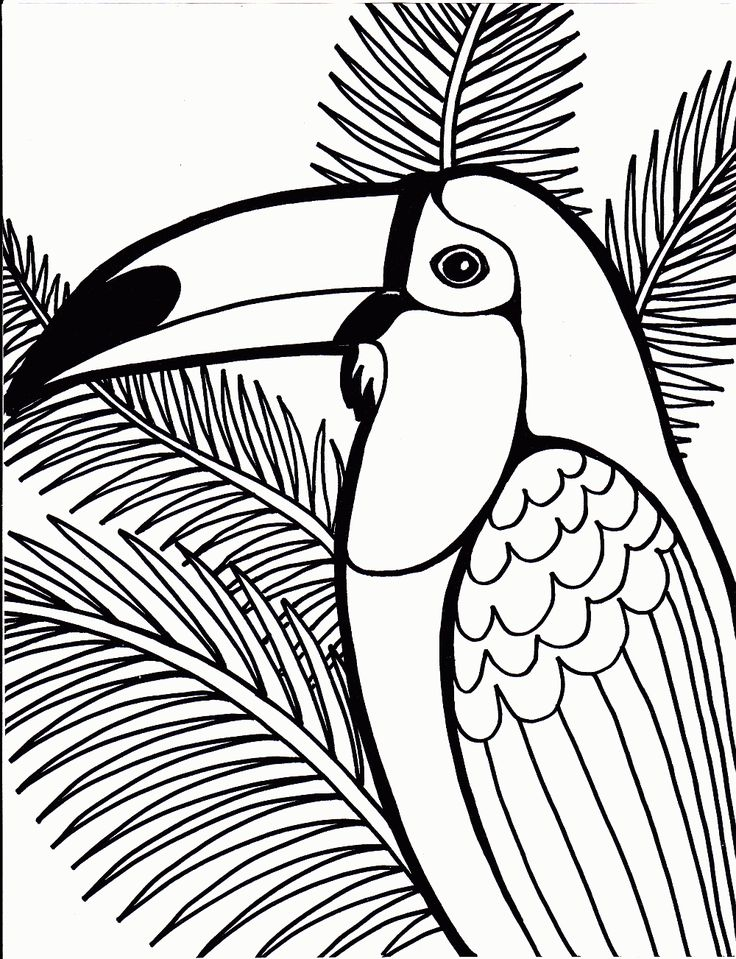 coloring pages cardinal bird coloring pages for kids