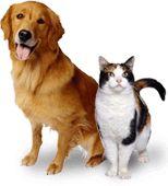 Canada's Canine Academy - Help Thru The Ruff Times