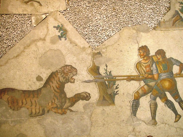 A 5th-century mosaic in the Great Palace of Constantinople depicts two venatores, gladiators, fighting a tiger. Mosaic museum Istanbul 2007
