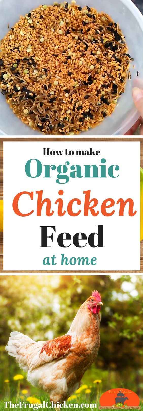 "Want to feed your backyard chickens organic homemade feed? Here's our ""tried-and-true"" recipe thousands of chicken owners depend on!"