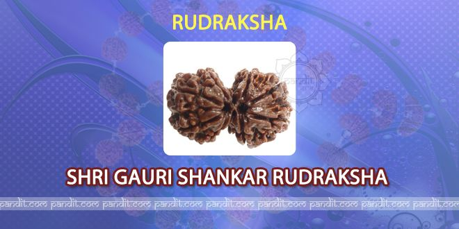 Shri Gauri Shankar Rudraksh by Acharya Rahul Kaushal -------------------------------------------------------- The two Rudraksh joined with each other are called as Gauri Shankar  Rudraksh. It is not found easily that is why is an important Rudraksh. It has all the blessings of Lord Shiva and magical powers of Goddess Paarvati. It gives all kinds of benefits to the person who wears it. http://www.pandit.com/shri-gauri-shankar-rudraksh/