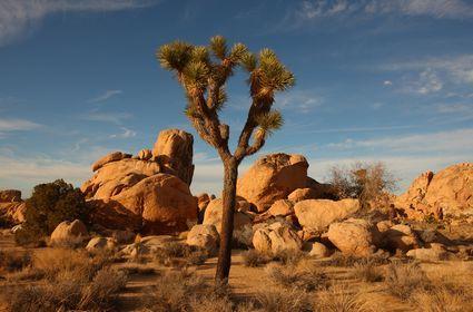 Joshua Tree National Park, USA: Foto Il paesaggio