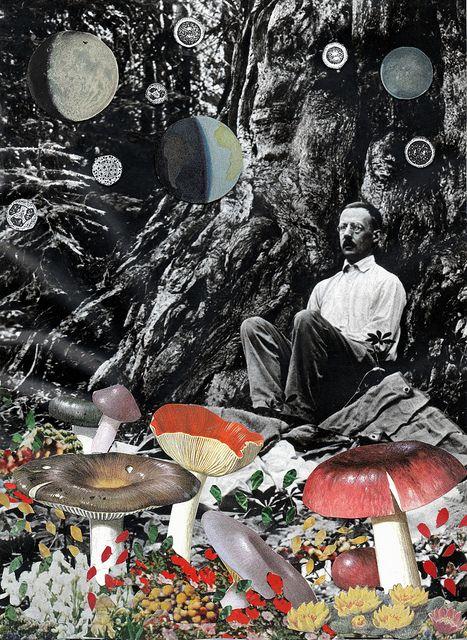 Mushrooms by ben///giles, via FlickrMagic Mushrooms, Ben Giles, Black And White, Collage Art, Photos Montag, Giles Collage, Collageart, Photomontage, Art Illustration