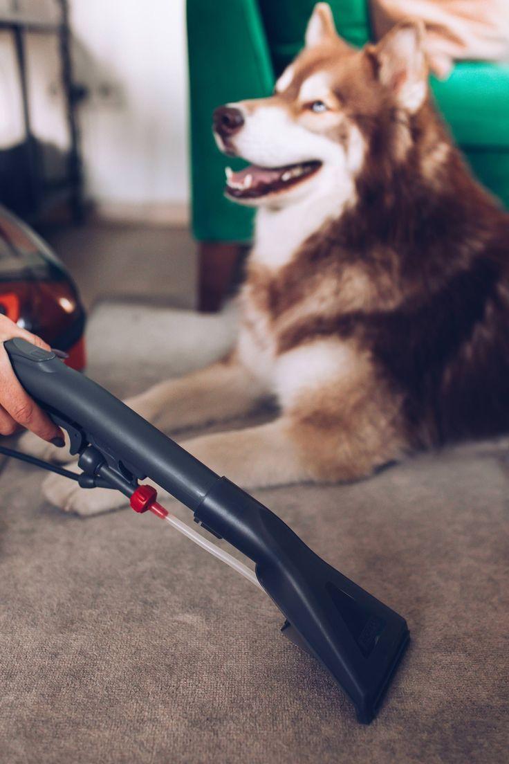 Anzeige Sauberer Haushalt Mit Hund Tierhaarstaubsauger Tierhaarstaubsauger Im Test Tierhaar Staubsauger Thomas Aqua Pet And Fami Hunde Hund Bellt Hund Diy