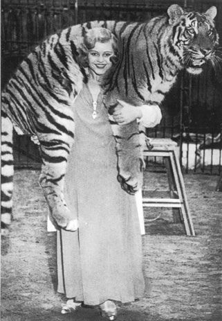 Miss Cilly and tiger at Circus Krone, 1930s