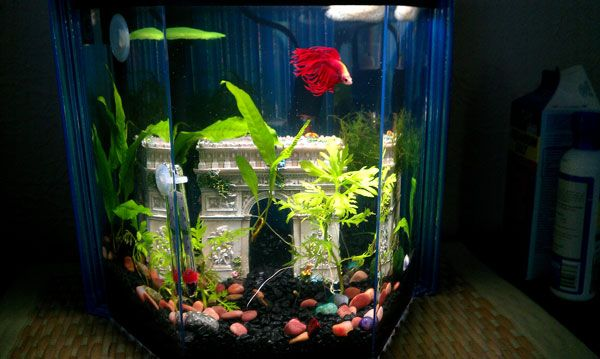 54 best betta aquariums images on pinterest for 5 gallon betta fish tank