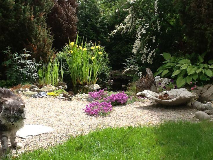 My Garden Pond.