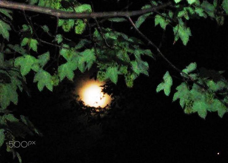 hiding the moon - null