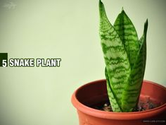 Are you unable to sleep well? Let's try and change the air of your bedroom. These five plants would help you get a peaceful sleep tonight1 1. Aloe Vera An indoor plant which is easy to keep alive, aloe vera has shown to emit oxygen at night, and may help