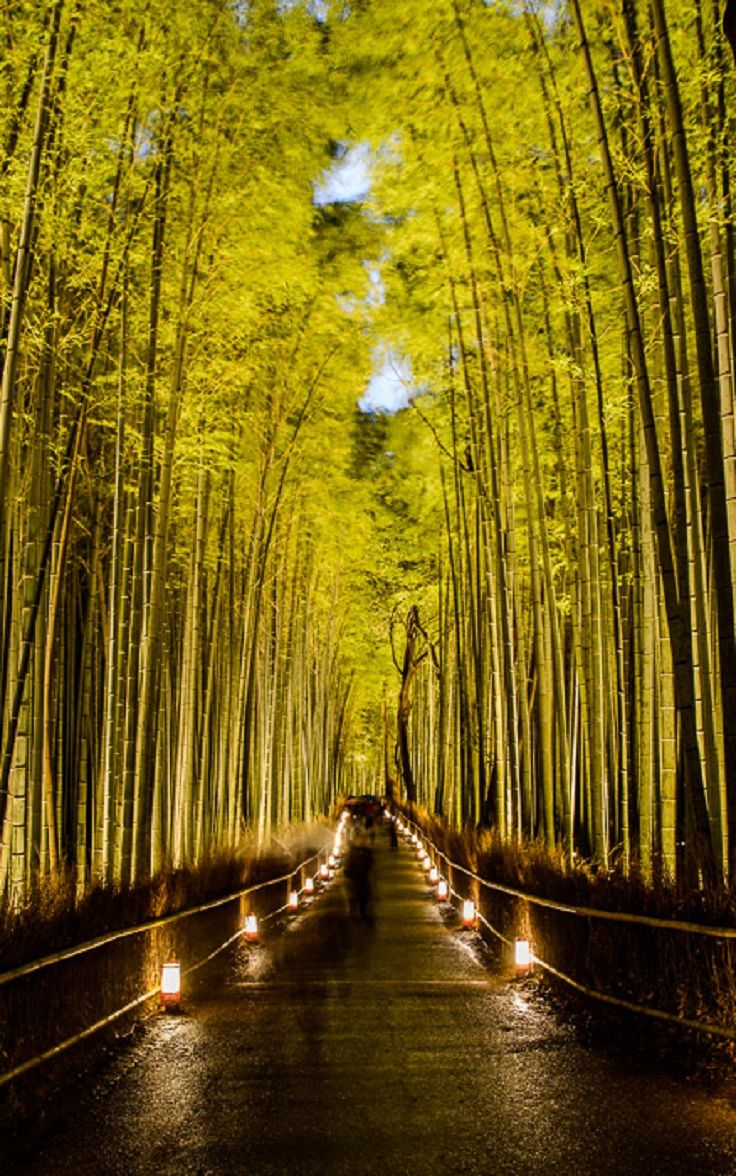 Arashiyama Bamboo Forest, Kyoto, Japan part of the TOP 10 Book-Story Magical Places on Earth - Japan has many places that we have found in our thoughts while reading some book. This enchanting image is one of my favorite photos of Japan, hope u like it 2! - Dragan