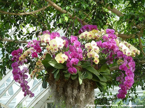 At The 2015 Orchid Show, The New York Botanical Garden In Enid A. Haupt