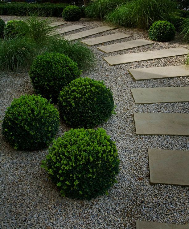Modern shrub sparsely set in crushed stones
