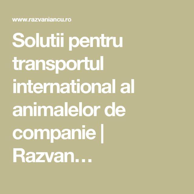 Solutii pentru transportul international al animalelor de companie   Razvan…