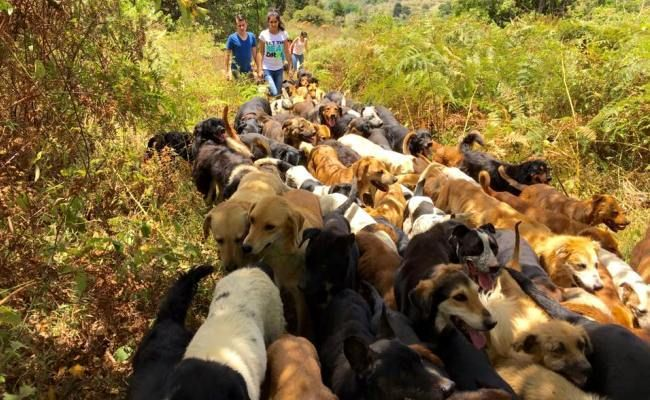 Dog Heaven: Hundreds of Strays Make Bucolic Costa Rica Shelter Their Home- now here is a dog walk