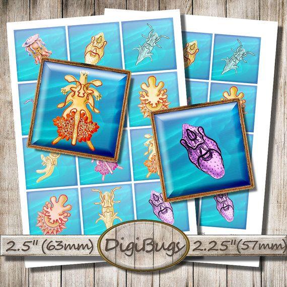 Sea Animals, Digital Collage Sheet, Printable Squares, Sea Life, Sea Slugs Jellyfish for Magnets, Instant Download, Printable Sea Images, b4