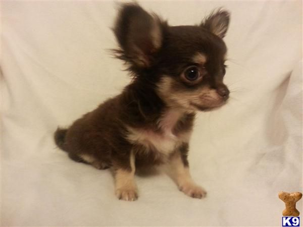 Found On Bing From Www K9puppy Co Uk Thisiwishicouldcallmine