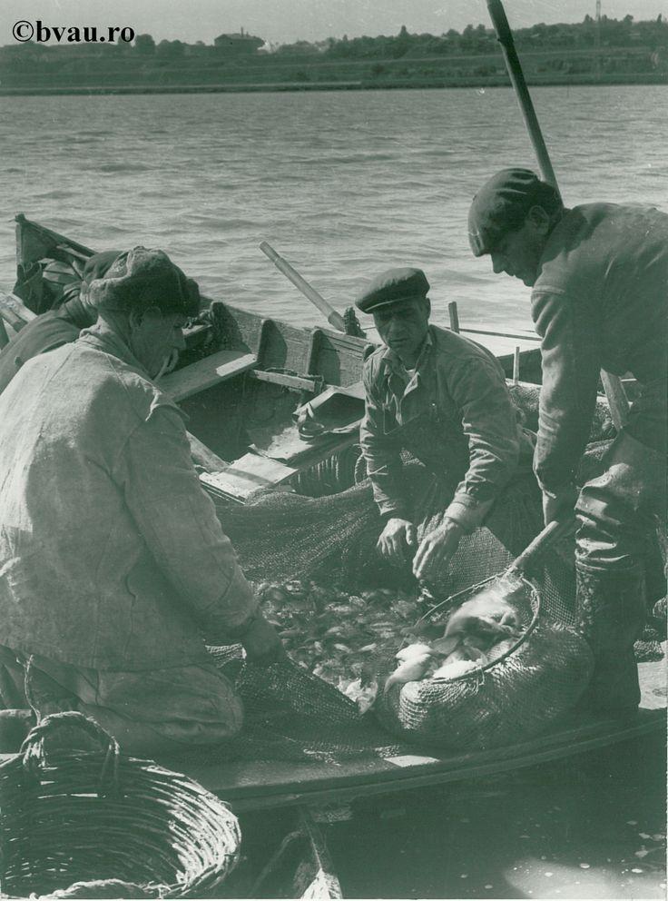 """Primul pescuit la crescătoria de la IAS Bădălan, anul 1968, Galati, Romania. Imagine din colecțiile Bibliotecii Județene """"V.A. Urechia"""" Galați."""