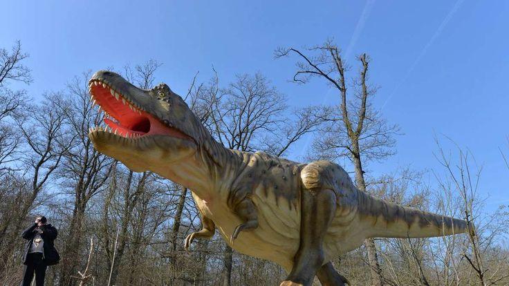 """Ernzen - Dinosaurier sind bereits seit 65 Millionen Jahren ausgestorben. Dennoch üben sie bis heute eine große Faszination aus. In einem neuen Dino-Park in der Südeifel kann man in ihre Welt """"zurückreisen""""."""