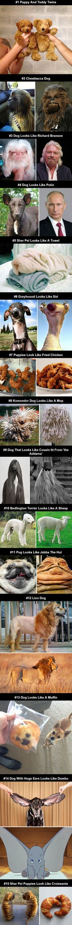 15 geeky dogs that look like other things...