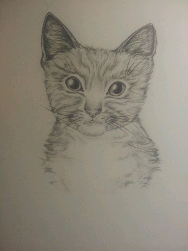 kitty by amelia jardine 2013