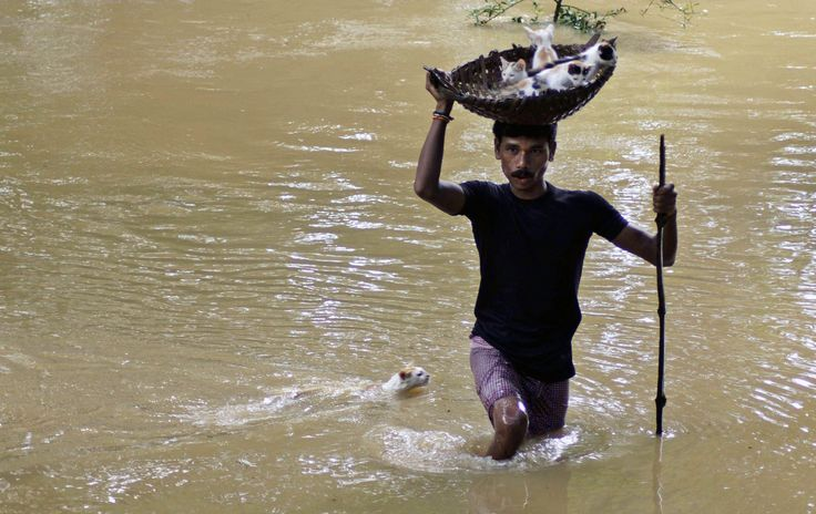 A villager carries kittens on a basket towards dry land as he wades through floodwaters, followed by the mother of the kittens, on the outskirts of Cuttack city, about 30 kilometers from the eastern Indian city of Bhubaneshwar Saturday, Sept. 10, 2011. AP / Biswaranjan Rout