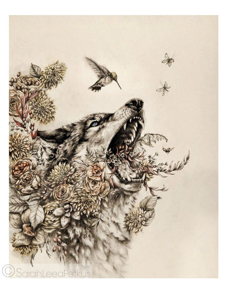 Thorn - Limited Edition fine art print- large poster print - 16 x 20 wolf animal artwork art print wolf art bird drawing floral illustration watercolor painting animal wall art coyote large art print wolf poster black and white art hummingbird nest and burrow flowers 65.00 USD #goriani