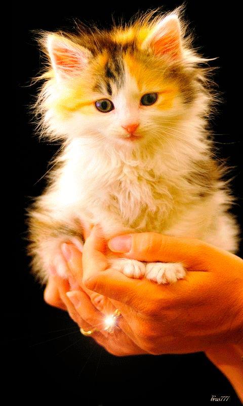 Девушки котенки gif и