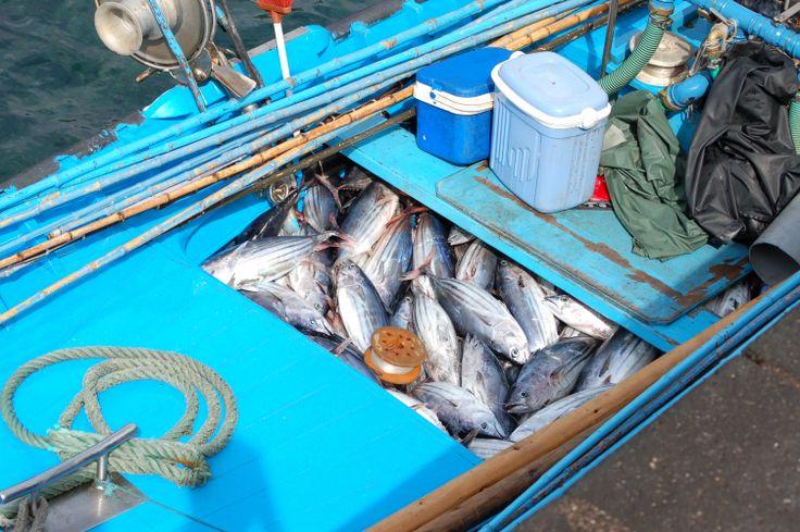 Tuna, Pico Azores