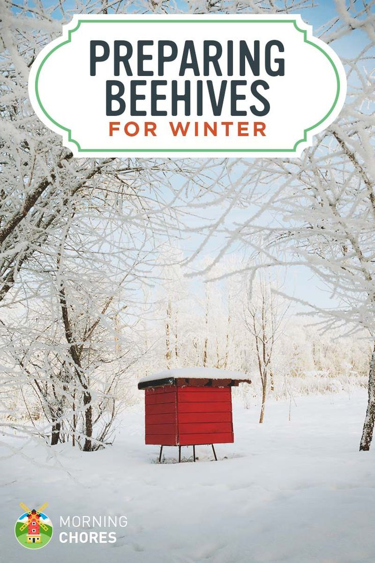 10 Steps to Wintering Your Bees to Keep Them Alive (Even If You're in the Northern Climates)