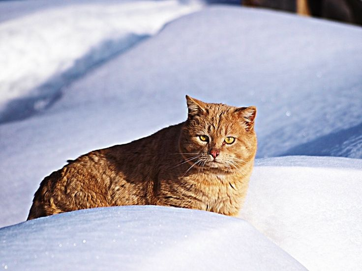 50 Majestic Cats Playing In The Snow