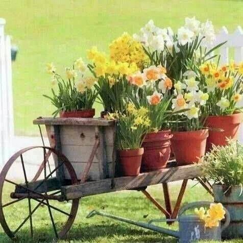 Para decorar o jardim e a vida! #flores #decoração