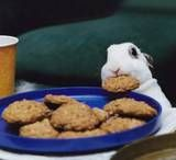 Baking For Your Bunny - Rabbits Online - bunny cookie recipe