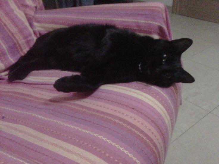Salem durmiendo