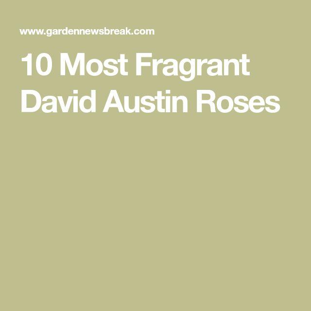 10 Most Fragrant David Austin Roses