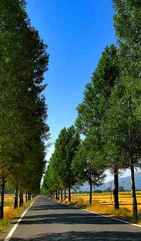 Begins the long road.. Mantinia ~ Arcadia (Peloponnese), Greece | by Giorgos Marossis (dim)