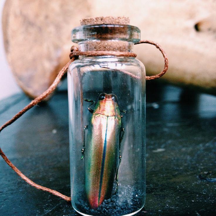 Een ongewoon object dat bestaat uit een medicijnflesje afgewerkt met kurk en waxkoord. Verder is het gevuld met curieus zwart zand uit Hawaii. Het Fiool herbergt ofwel de prachtkever fulminans ( smaragdgroene schijn met een rode vurige achterkant ) ofwel de aurora ( gouden schijn). 1858 soort van glazen flesch met eenen langen hals, apothekersfleschjeMeasurements54 x 22mm