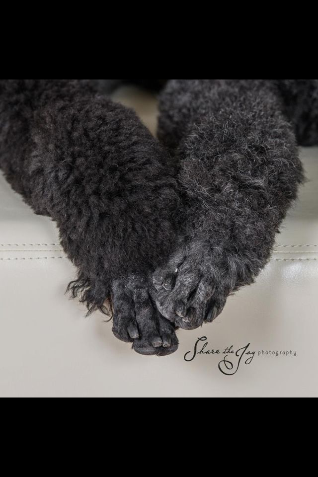 Poodle feet are the best!
