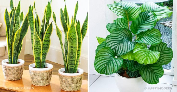 Plants that are perfect for dark places like an office or home with little light.