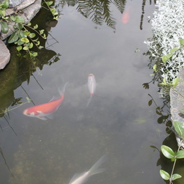 17 best images about fish ponds waterfalls on pinterest for Koi pond maintenance near me