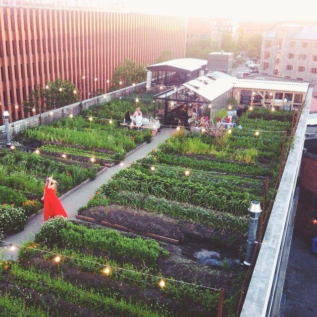 Restaurante y granja urbana en azotea Stedsans, copenhagen