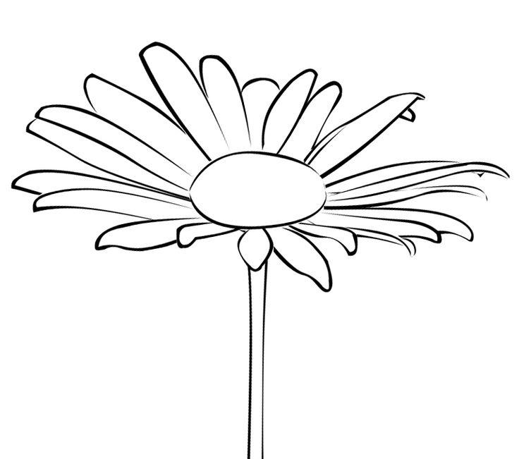 цветы герберы рисунки карандашом пробег устроил