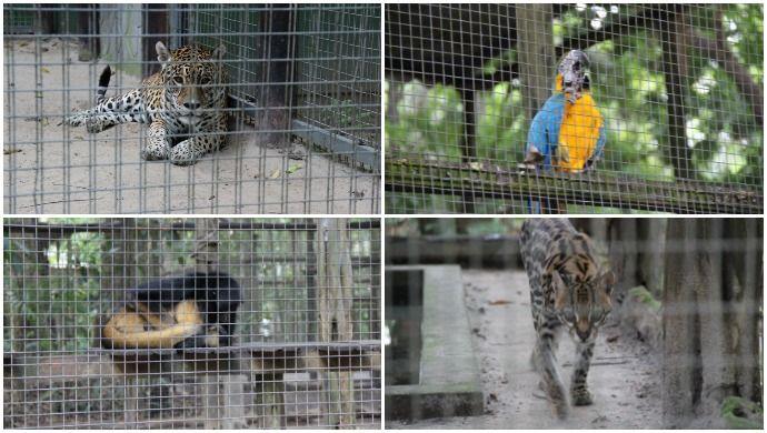 """""""Vila Olímpica"""" do AM tem zoológico, shopping e luxo no meio da floresta #globoesporte"""