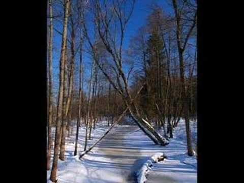 Lesy mírného pásu - YouTube