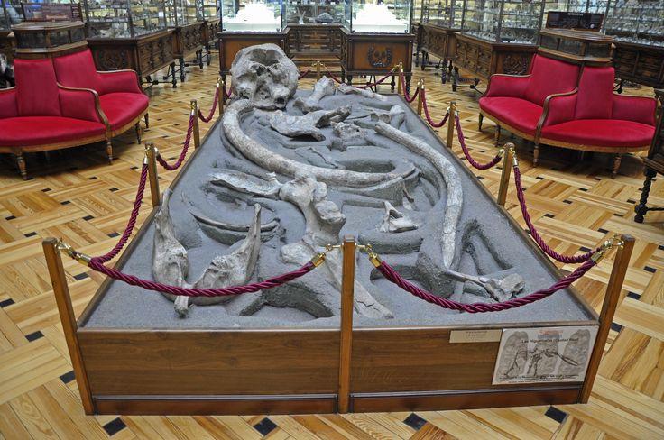 Mastodonte de Las Higueruelas