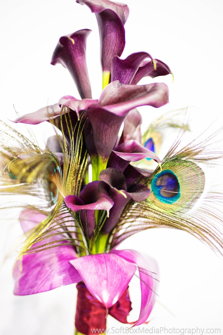 43 best edgy flowers images on pinterest floral arrangements calla lilies and peacock feathers izmirmasajfo Choice Image