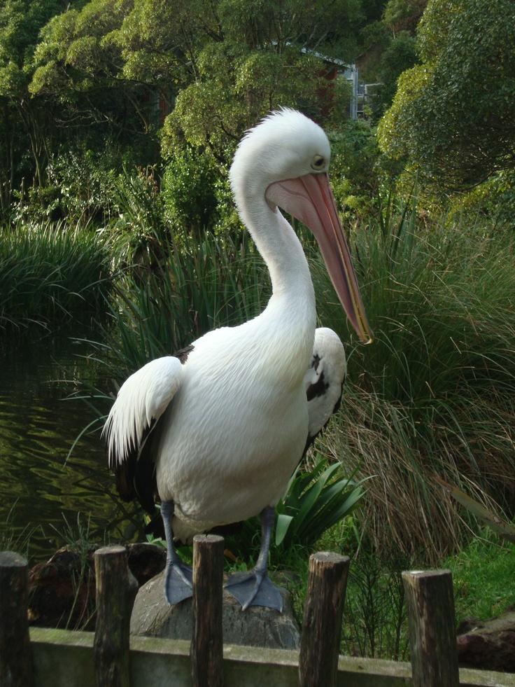 Wellington Zoo!